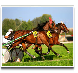 image of standardbred race horses on Gallops GSD1
