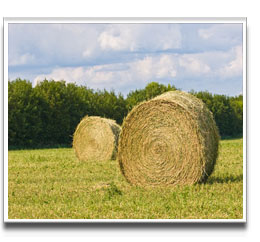 image of Hay