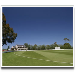 image of Cricket Outfield produced from Grass Seed mixture