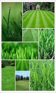 image of lawns